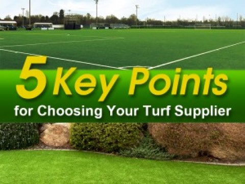 5 Key Points for Choosing Your Turf Supplier